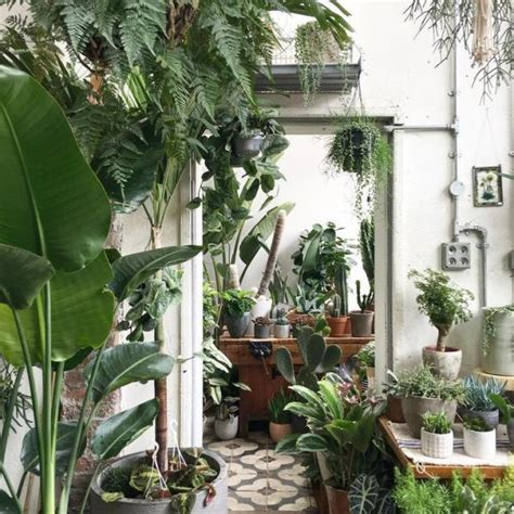 why indoor plants are a must for interior evening standard
