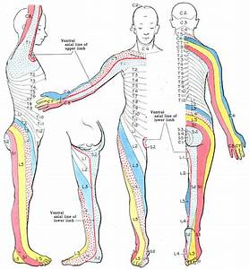 Radiculopathy | Notes on Medicine/Surgery