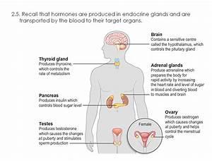 5  Homeostasis And Response