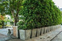 Hochwachsende Pflanzen Sichtschutz by Bambushecke Pflanzen 187 Das Sollten Sie Dabei Beachten