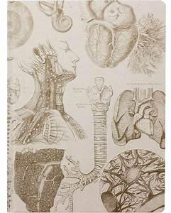 Human Anatomy Xl Journal