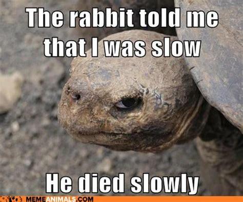 Tortoise Meme - 15 funny tortoise pictures