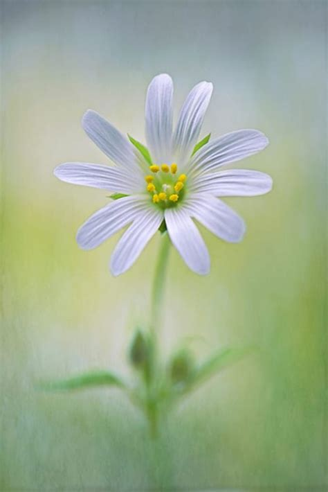 beautiful macro images   international garden