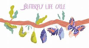 Life Cycle Moth Stock Illustrations  U2013 38 Life Cycle Moth