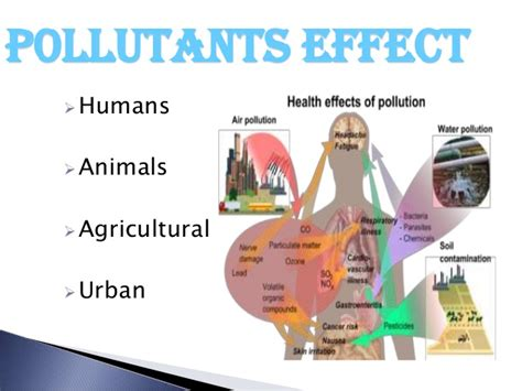 contamination  soils  organic  inorganic