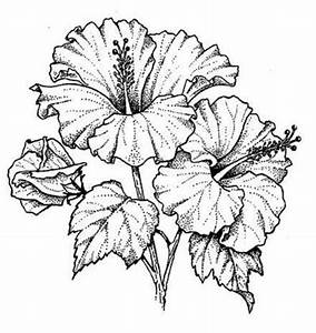 Pin Hibiscus Flower Drawing Pisces Symbol Tattoo Designs ...
