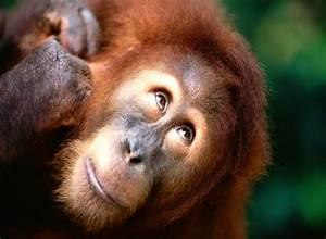 Encyclopaedia of Babies of Beautiful Wild Animals: Baby ...