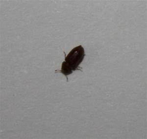 Insecte De Maison : identification insecte salle de bain notre ~ Melissatoandfro.com Idées de Décoration