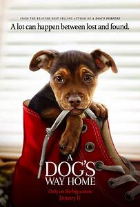 A Dog39s Way Home Movie Trailers ITunes