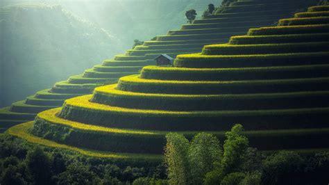 wallpaper farm terrace farming agriculture nature