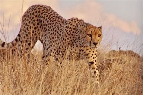 Thinking of an African Safari? Start Here. - Tully Luxury ...