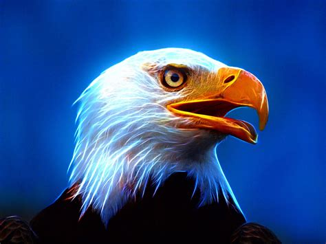 Animated Eagle Wallpaper - eagle wallpapers eagle hd wallpapers for free