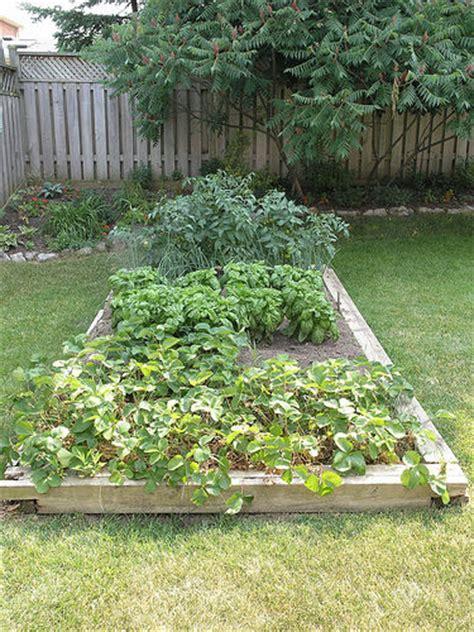 small vegetable garden flickr photo