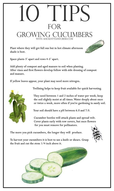 10 Tips For Growing Cucumbers  A Healthy Life For Me