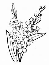 Gladiolus Flower Coloring Pages Outline Flowers Drawing Tattoo Printable Tattoos Print Sketch Gladioli Result Adult Google Recommended Garden sketch template