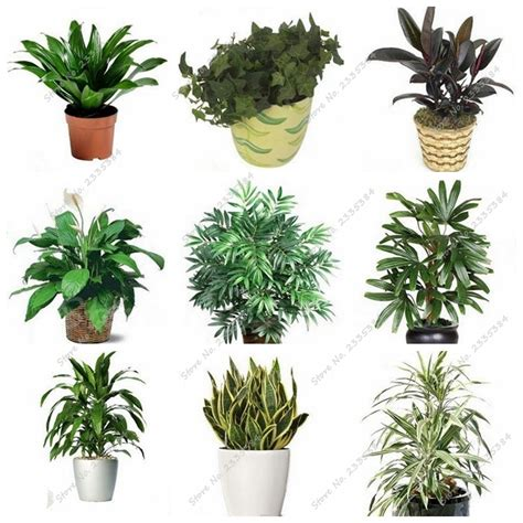 cheap indoor plants get cheap office plants aliexpress com alibaba
