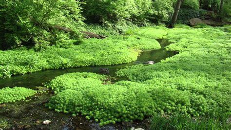 gentle stream  hours gentle rivers streams nature