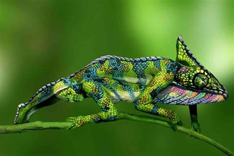 cameleon body painting view hd image  cameleon body