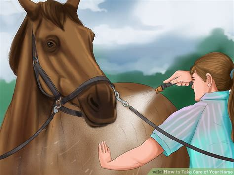 horse care take step wikihow ways hooves