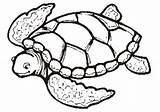 Coloring Pages Turtles Sea Turtle Printable sketch template
