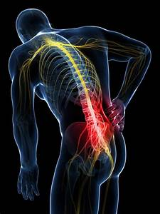 The Rabbit Hole Of Back Pain  What Your Doctor Doesn U0026 39 T