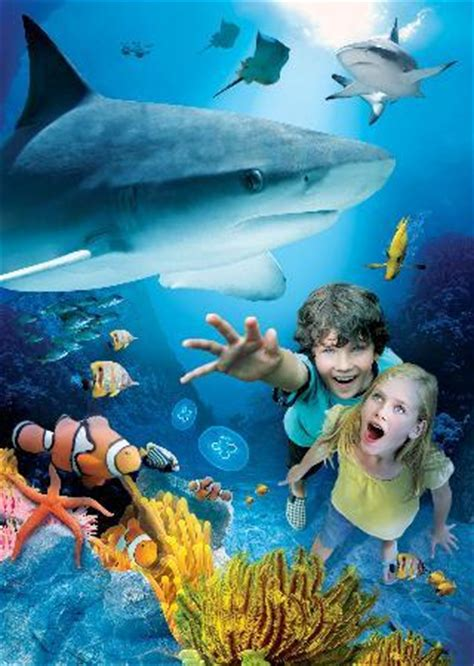 sea aquarium california sea carlsbad picture of sea aquarium carlsbad tripadvisor