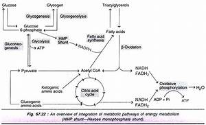 Metabolism And Its Integration  With Diagram