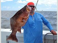 Tim Champagne's massive mangrove snapper could set state