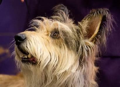 Breeds Dog Westminster Press Obedience Herald Pressherald