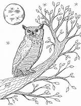 Owl Horned Tree Coloring Robin sketch template