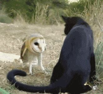 Do Barn Owls Eat Cats by 29 Surprisingly Delightful Owl Gifs