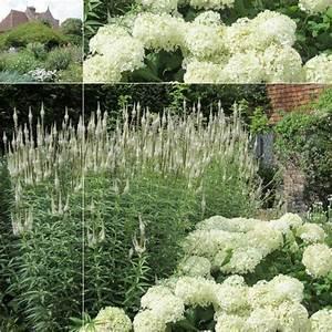 Welche Pflanzen Passen Gut Zu Hortensien : vorgarten mit bildern passt die hortensie annabell da ~ Lizthompson.info Haus und Dekorationen