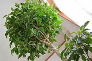 5 piante che purificano l'aria di casa Sgaravatti eu