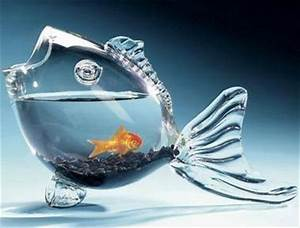 14-Creative & Unique Fish Bowl Designs - The Pets Central