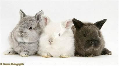 Rabbits Bunny Bunnies Wallpapers Background Animals Wallpapersafari