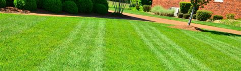 best type of grass top 28 best grass lawn lawn grass archviz unreal engine forums which types of grass are