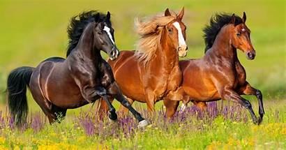Horse Pony Horses Quiz Tip Mortality Weight