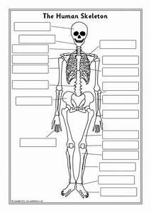 Human Skeleton Diagram Worksheet