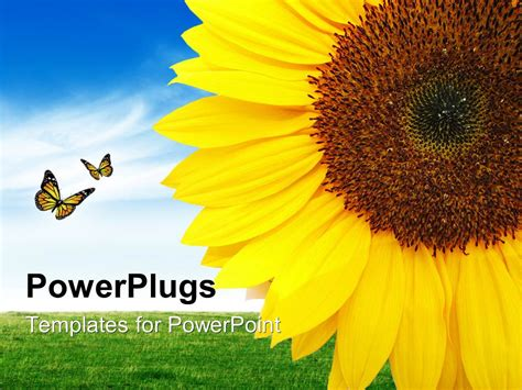 powerpoint template  sunflower   number