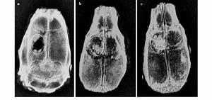 Digital Mammography Images Of The Rat Calvarial 8 Weeks