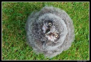 Baby Snowy Owl 3 by Engelsman on DeviantArt