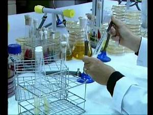 T U00e9cnicas B U00e1sicas De Microbiolog U00eda Siembra Y Aislamiento De