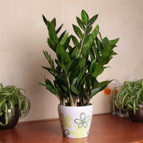 pflegeleichte zimmerpflanzen  vorschlaege archzinenet