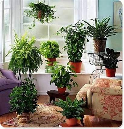 Houseplants Indoor Plants Reasons Farms Courtesy Costa