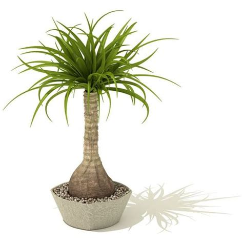 indoor small trees indoor palm tree 3d model cgtrader com