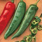 salsa pepper salsa peppers salsa pepper seeds pepper