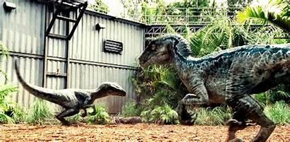 Velociraptor Gifs Raptors Dinosaur Jurassic Raptor Rex
