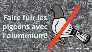 Faire Fuir Les Pigeons : r pulsif pigeons 10 trucs pour les loigner ~ Melissatoandfro.com Idées de Décoration