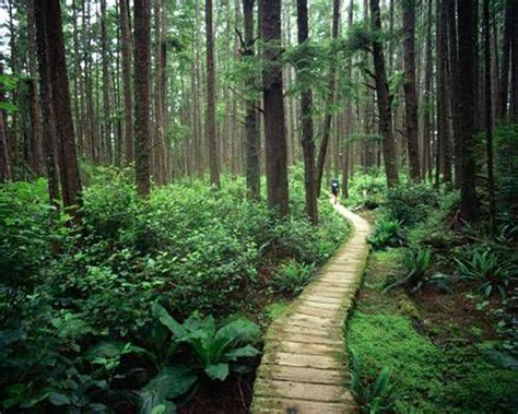 forest bathing  odd natural ways  boost  health