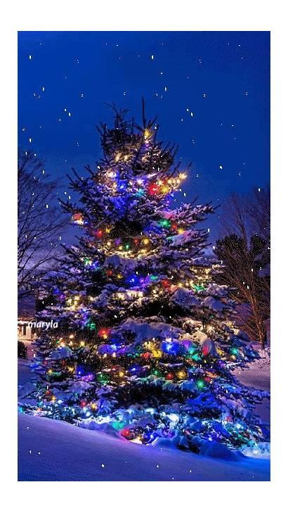 Christmas Tree Animated Gifs Xmas Pretty Winter